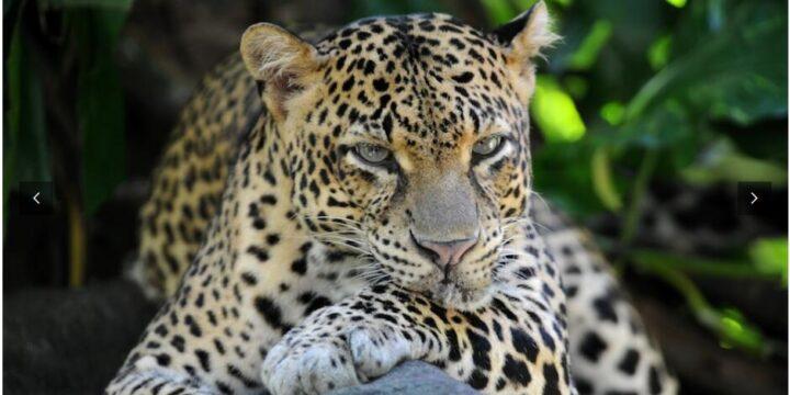Sri Lanka – Refreshingly Diverse!
